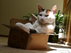cat070713